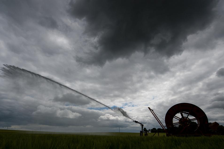 Ein Feld mit Wintergerste wird mit einer Beregnungsanlage bewässert.