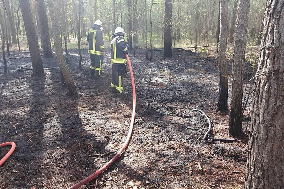 Feuerwehrleute löschen am Dienstagnachmittag einen Waldbrand am Sportplatz in Uhsmannsdorf.