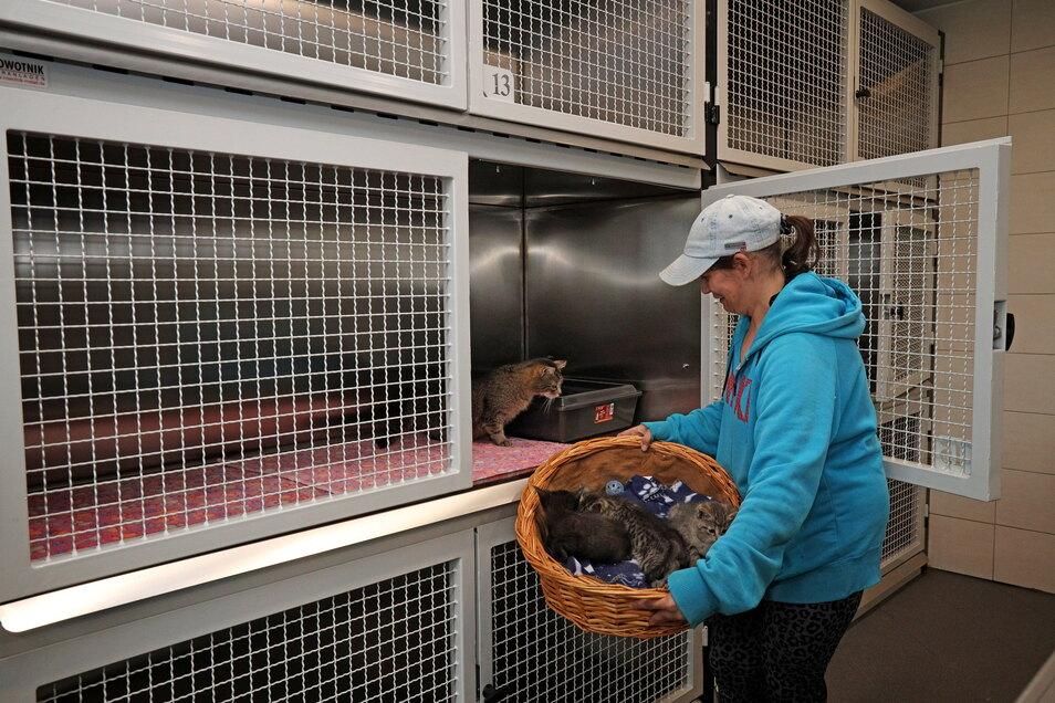 Tierheim-Mitarbeiterin Sarah Binder setzt die ersten Katzen in die neuen Käfige.