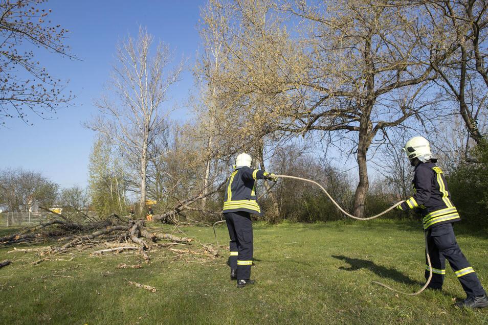 Für die Fällaktion neben dem Freibad in Riesa war eine Sondergenehmigung nötig. Normalerweise dürfen Bäume außerhalb von Waldgebieten nur bis Ende Februar gefällt werden.