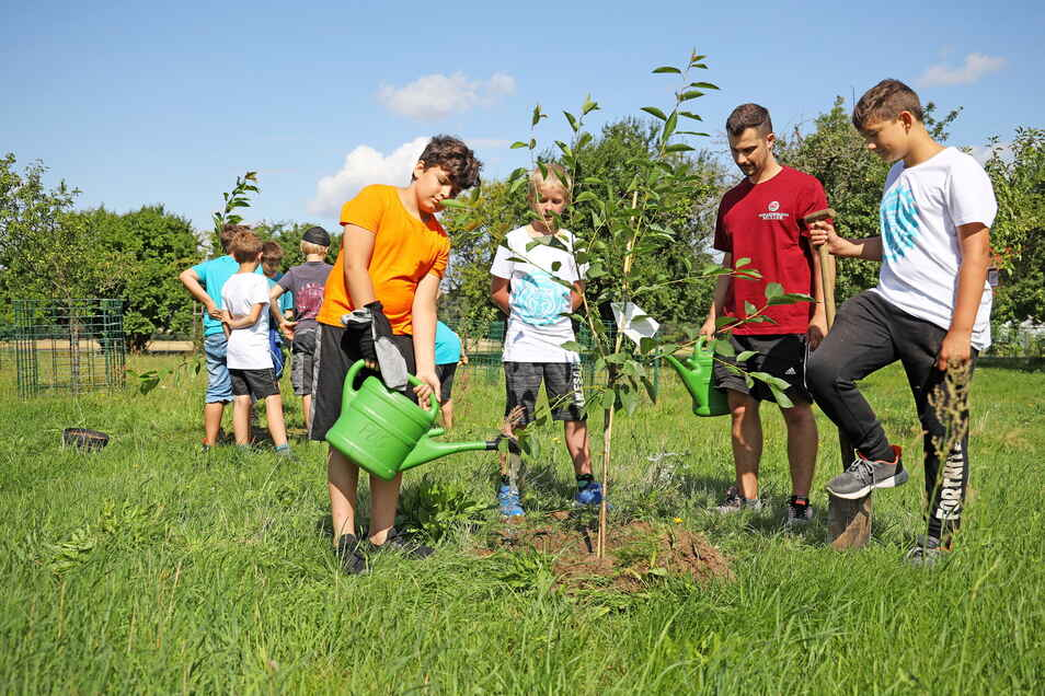 Jedes Jahr werden auf Gut Göhlis neue Obstbäume gepflanzt.