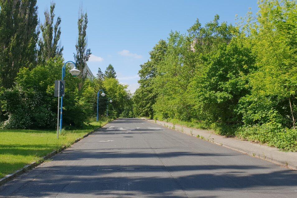 Ein Blick in den Pistoiaer Weg. Bäume und Sträucher verdecken Schandflecke dahinter.