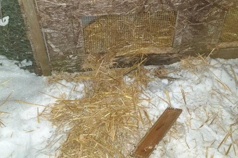 Ein Fuchs hat sich am Hasenstall einer Radebeulerin zu schaffen gemacht.