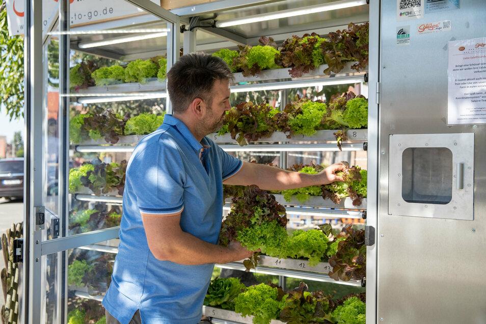 Jochen Haubner, Gärtnermeister, befüllt einen Salat-Automaten mit frischem Salat.