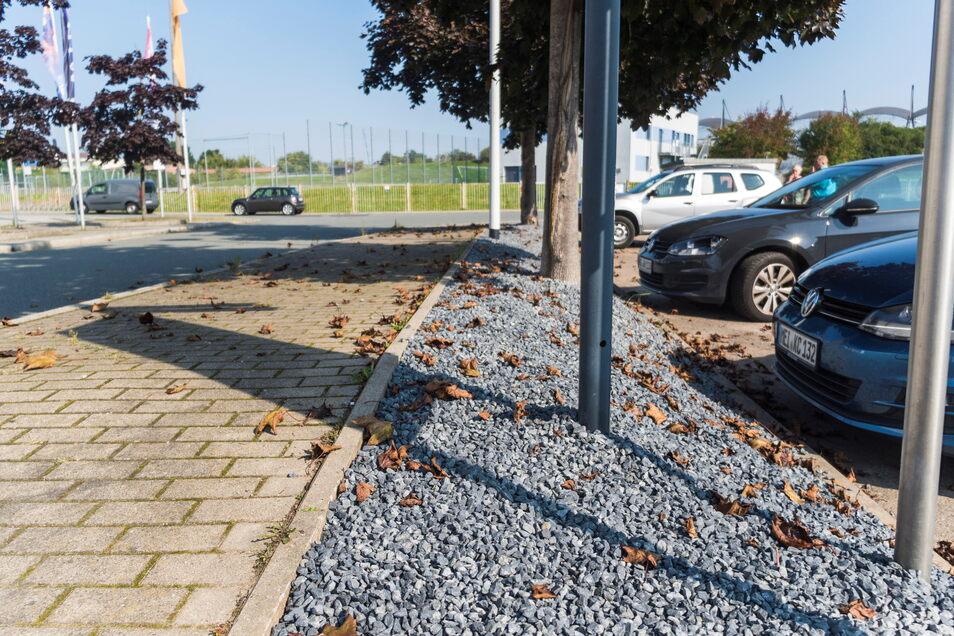 Auf diesem Streifen zwischen Fußweg und Parkplatz neben der Sachsenarena (links, nicht im Bild) wuchsen vor einigen Wochen Bodendecker. Dass sie entfernt worden, will ein Stadtrat nicht hinnehmen.