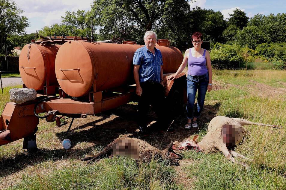 Silke Fuhrmann und Jürgen Werner, der bereits einen Tag zuvor Tiere an einen Wolf verloren hat, vor den in Helfenberg getöteten Schafen.