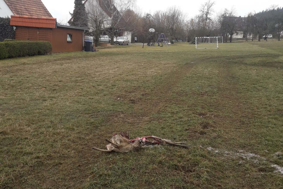 Keine 50 Meter von einem Spiel- und Bolzplatz in Ellersdorf entfernt, fanden Anwohner das Reh, das offenbar von Wölfen gejagt und dann gefressen wurde.