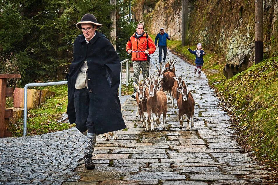 Hirte Patrick Pietsch am Sonntag mit seinen Ziegen beim Abtrieb.