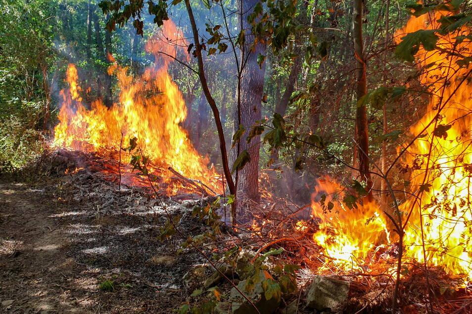 Zu einem ersten Waldbrand ist es am Mittwoch auf dem Valtenberg in Neukirch/Lausitz gekommen. Ursache war ein Lagerfeuer. (Symbolbild)