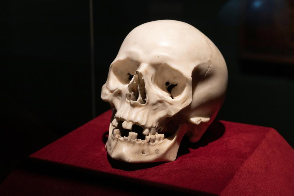 """Attraktion der Sonderausstellung """"Bernini, der Papst und der Tod"""" ist dieser Schädel, den der römische Bildhauer Gian Lorenzo Bernini 1656 für Papst Alexander VII. aus Carraramarmor anfertigte. Bernini wurde 1598 in Neapel geboren und starb 1680 in"""