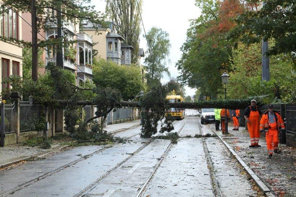 Ein Baum stürzte auf der Ludwig-Hartmann-Straße in die Oberleitung der Straßenbahn