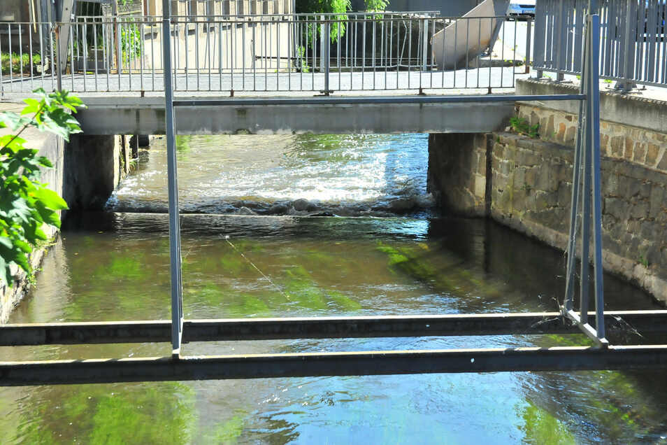 Niedrigwasser in der Großen  Röder in Großenhain.  Foto: Anne Hübschmann