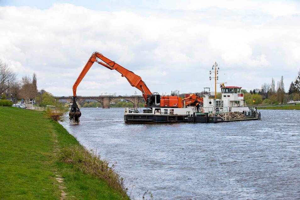 """Schwimmgreifer """"Meißen"""" beim Einsatz in Pirna: Weggerutschtes Material wird wieder am Ufer aufgeschüttet."""