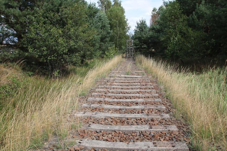 Die Schwellen liegen noch, die stählernen Gleise wurden abgebaut. Ein Jäger hat mitten auf dem Bahndamm einen Hochsitz errichtet.