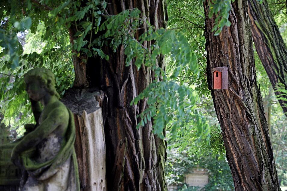 Für die Vögel auf dem Friedhofsgelände hängen überall Nistkästen.