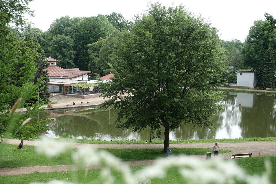 Die vor etwa 30 Jahren gepflanzte Buche steht in der Sichtachse zum Teich und soll versetzt werden.