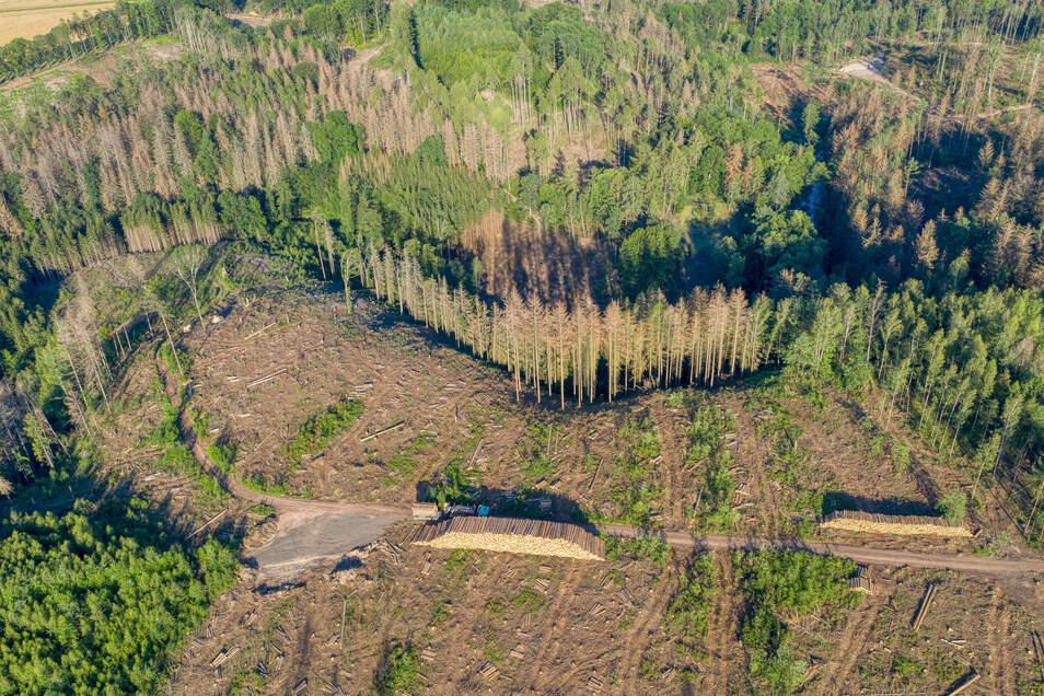 Aufforst-Arbeiten im Waldgebiet Nossen/Reinsberg. Hier hat der Borkenkäfer tausende Fichten vernichtet.