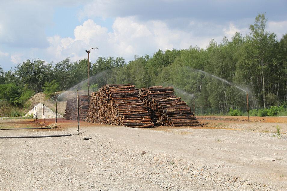 So sieht es auf dem Nasslagerplatz der BUG GmbH in Sabrodt aus, wenn die Sprinkleranlage in Betrieb ist. Im Bild zu sehen sind 1.000 Festmeter Holz.
