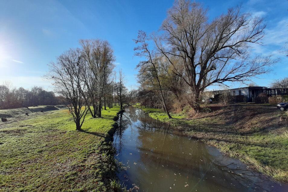 Die Schwarze Elster führte an der Jenschwitzbrücke in Hoyerswerda auch im Sommer stets Wasser. So zeigte sie sich in dieser Woche.