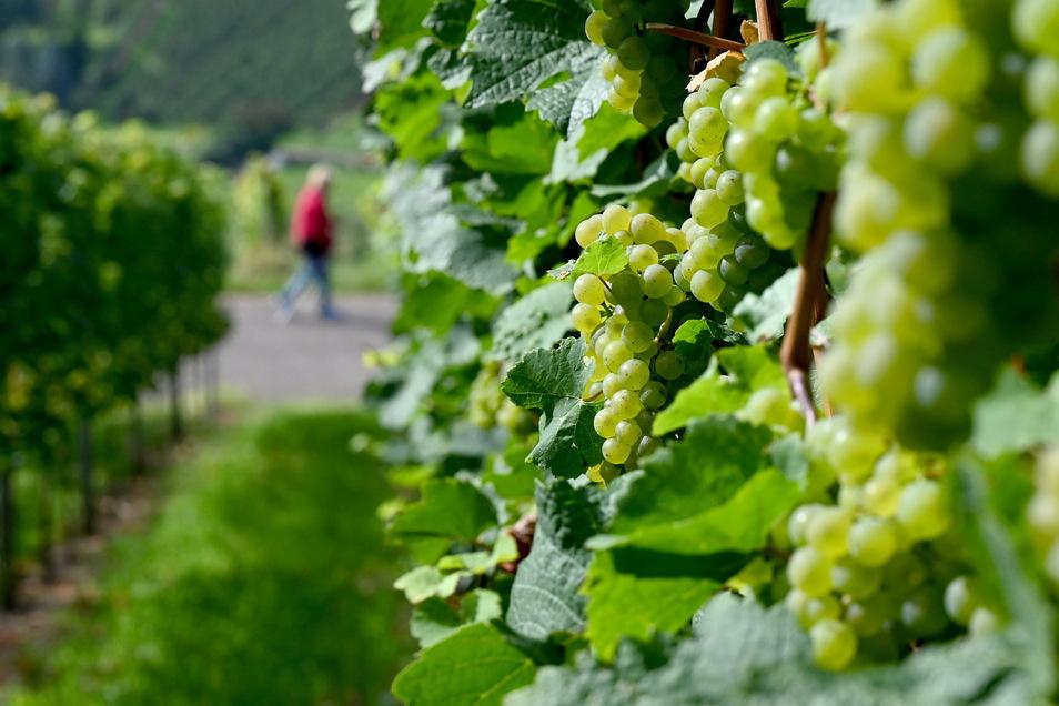 Die Menschen in Sachsen können sich auf milde Temperaturen am Wochenende freuen.