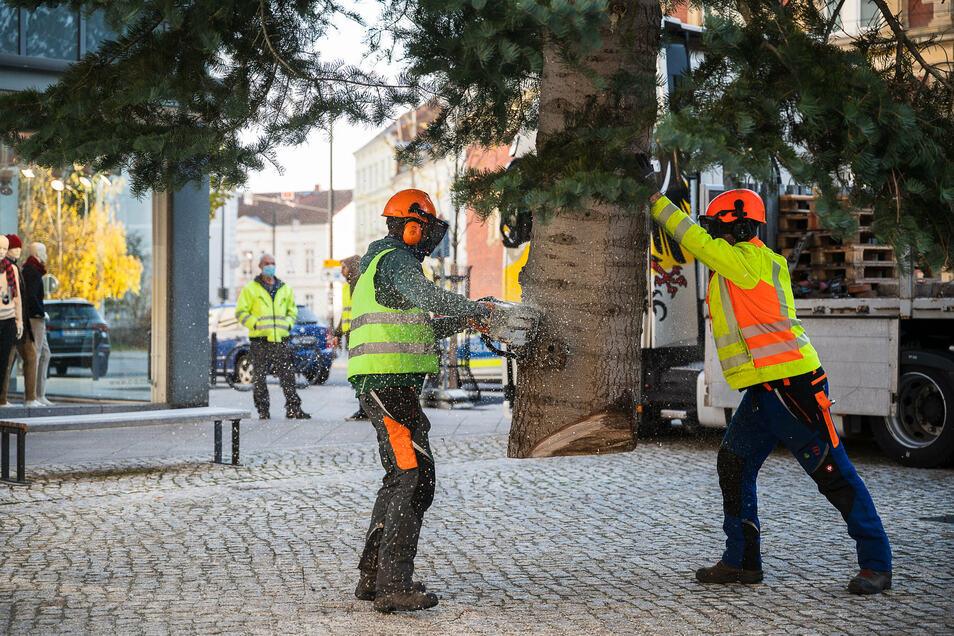 ... und schließlich wird der Baum zurückgerückt.