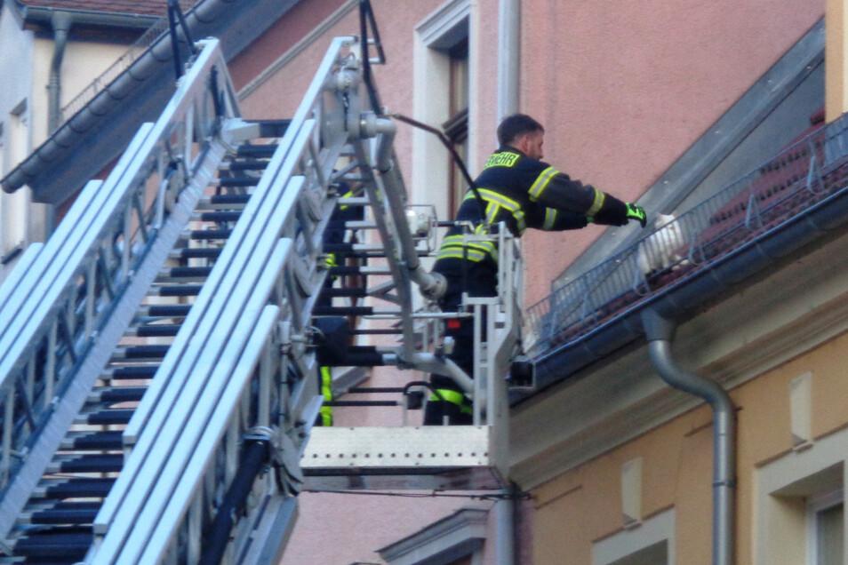 Jennas schönster Moment: Ein Feuerwehrmann holt das Kätzchen vom Dach.