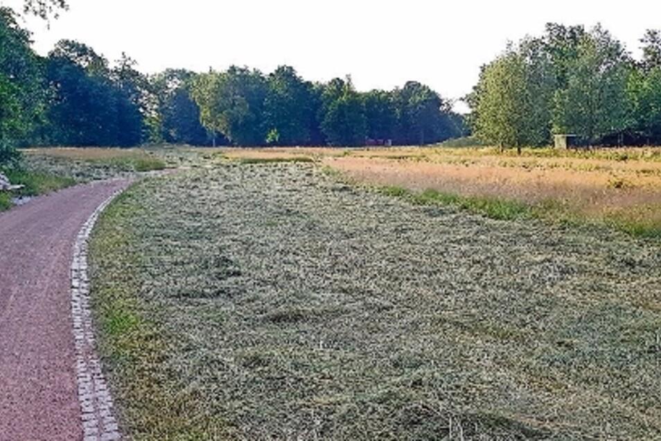 """Vor dem Fest wurden die Wiesen im Stadtpark nach der neuen """"Puppenstuben-Strategie"""" gemäht, d.h. streifenweise. Damit sollen Insekten mehr Chance auf Entwicklung gegeben werden."""