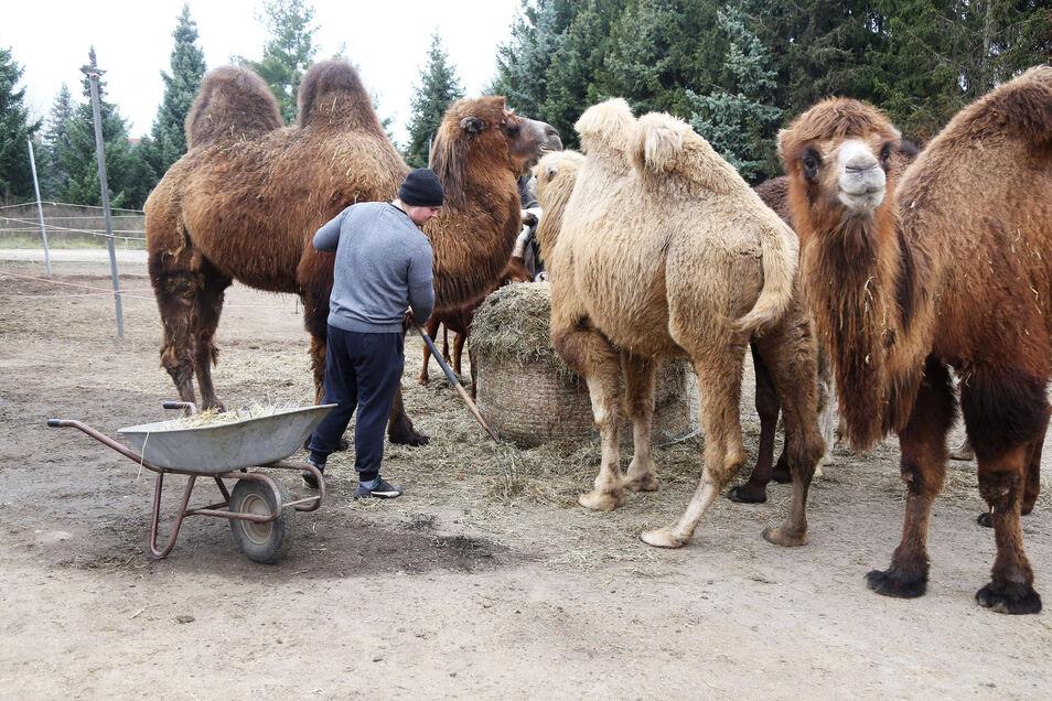 Zum Zirkus Aeros gehören etliche Tiere. Sie und die Mitarbeiter sitzen derzeit in Röderau fest.