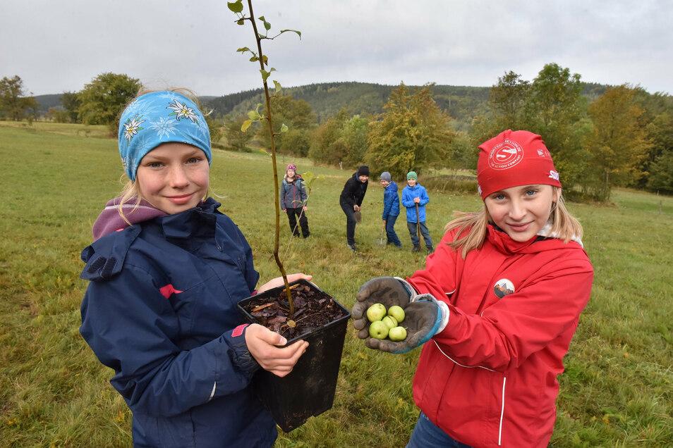 Linda und Jördis pflanzten zusammen mit den anderen Schülern der fünften Klassen Wildapfelbäume für den Geisingberg.