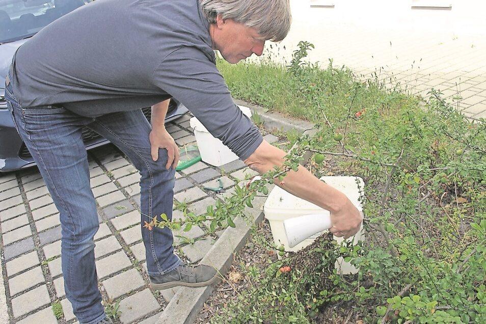 Bevor Sören Flint den Bienenschwarm einfangen kann, besprüht er die Tiere mit Wasser, um sie ruhiger zu machen.