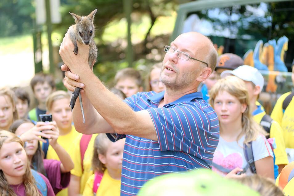 Ein Höhepunkt der letzten Jahre im Tierpark. Heiko Drechsler zeigt Fünftklässlern der Triebischtalschule das Minikänguru Gertrud. Nach dem Tod deren Mutter zog er das Babykanguruh mit der Flasche auf.