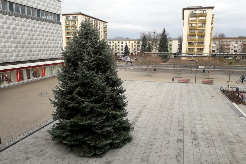 Wie in jedem Jahr hat das TAGEBLATT-Team wohl den besten Blick auf den Baum auf dem Lausitzer Platz. Morgen soll er geschmückt werden.