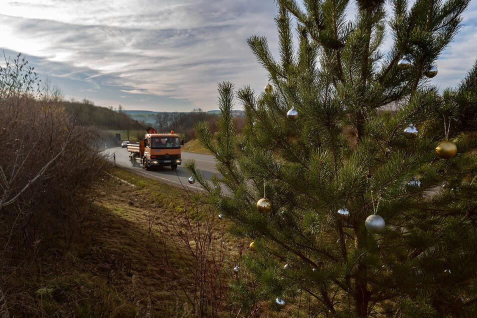 Die macht was her: Die Kiefer an der S 36 bei Freital ist wieder weihnachtlich geschmückt worden - unbemerkt.