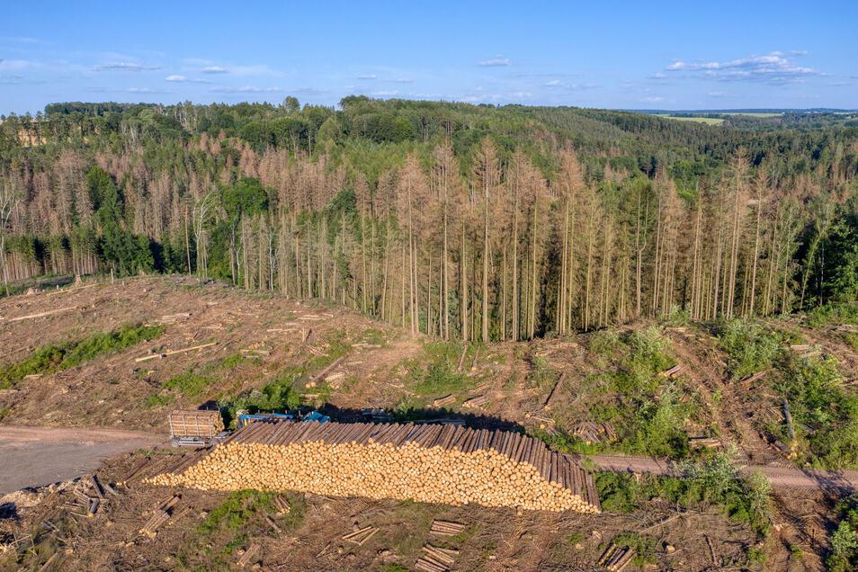 Holz stapelt sich im Waldgebiet Nossen/Reinsberg. Der Waldbesitzer will nicht so viele Bäume fällen - doch er muss, um den Wald vor dem Borkenkäfer zu retten.
