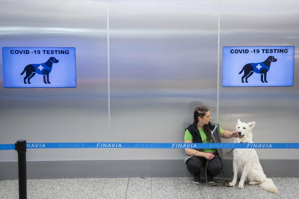 Ein Covid-19-Spürhund sitzt hinter einer Absperrung am Flughafen Helsinki-Vantaa.