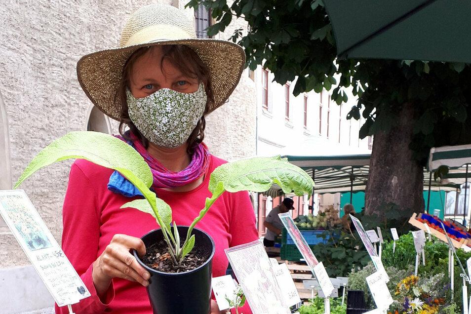 Nicht nur Grün-, sondern auch Würz- und Heilkräuterpflanzen gibt es an diesem Sonnabend beim Grünmarkt auf dem Hof der Roten Schule in Meißen.