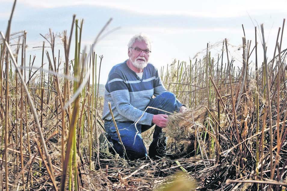 Steffen Bergner hat für die Fasern, die sich aus den Hanfstängeln gewinnen lassen, noch keine Interessenten gefunden.