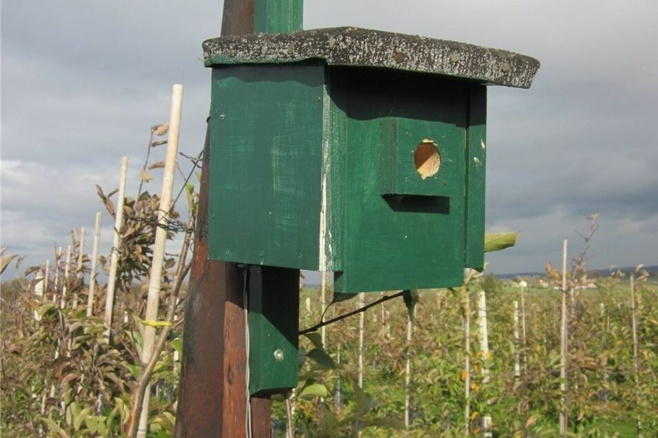 Mit Nistkästen und Bruthilfen für Vögel versuchen die Hersteller nun in einer groß angelegten Aktion, den Einsatz chemischer Mittel noch weiter zu minimieren.