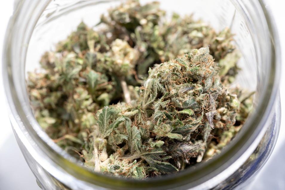 Cannabis in Dresden-Löbtau gefunden: Die Polizei ist dem typischen Geruch der Pflanze gefolgt.