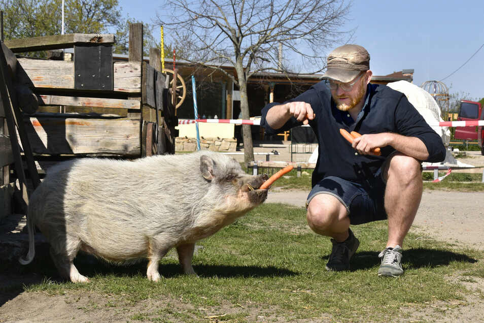 Die Tiere kennen keinen Shutdown: Robert Heinrich macht Schwein Borsti mit einer Möhre glücklich.