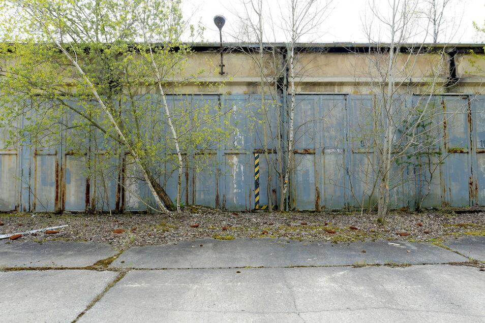 Die Natur holt sich ihr Terrain zurück: Eine Halle des NVA-Komplexes, die wohl in den 60ern entstanden ist.