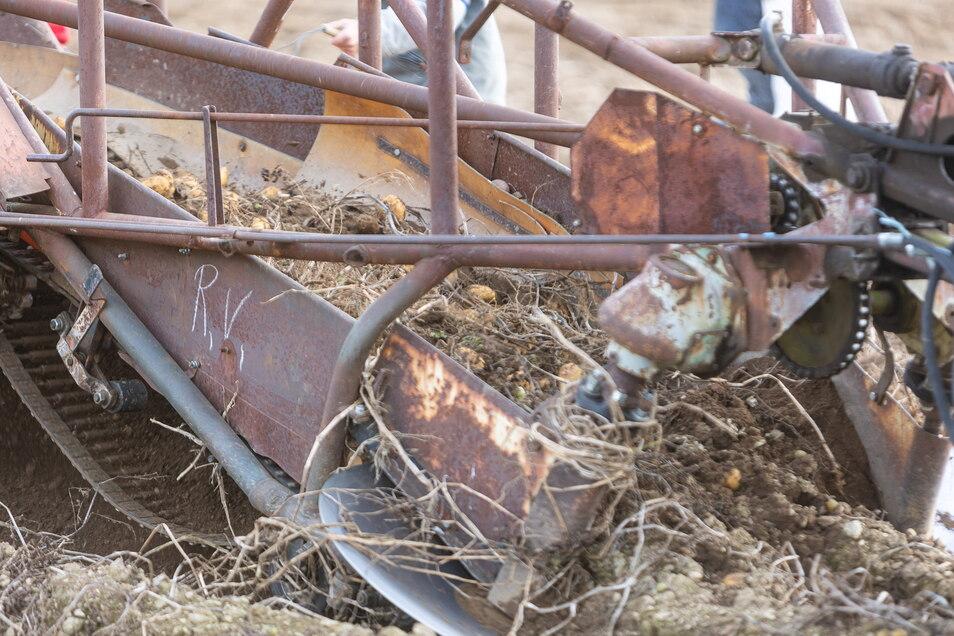 Der Siebkettenroder bei der Arbeit: Zuerst fällt die Erde durchs Sieb, dann die Kartoffeln auf die Erde.