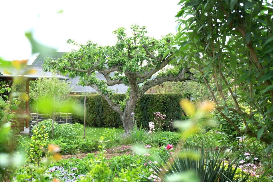 Gerade in den Städten blühe es vielfältiger als auf dem Land, so Tommy Ruhland. Das liege vor allem an den Kleingärten. Ein Bild von der Gartensparte auf der Schreberstraße in Meißen.