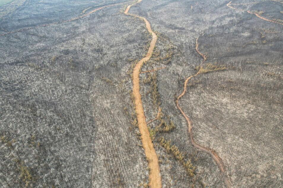 Türkei, Milas: Die Luftaufnahme zeigt einen niedergebrannten Wald in der Nähe des Kohlekraftwerks Kemerkoy im Südwesten der Türkei.