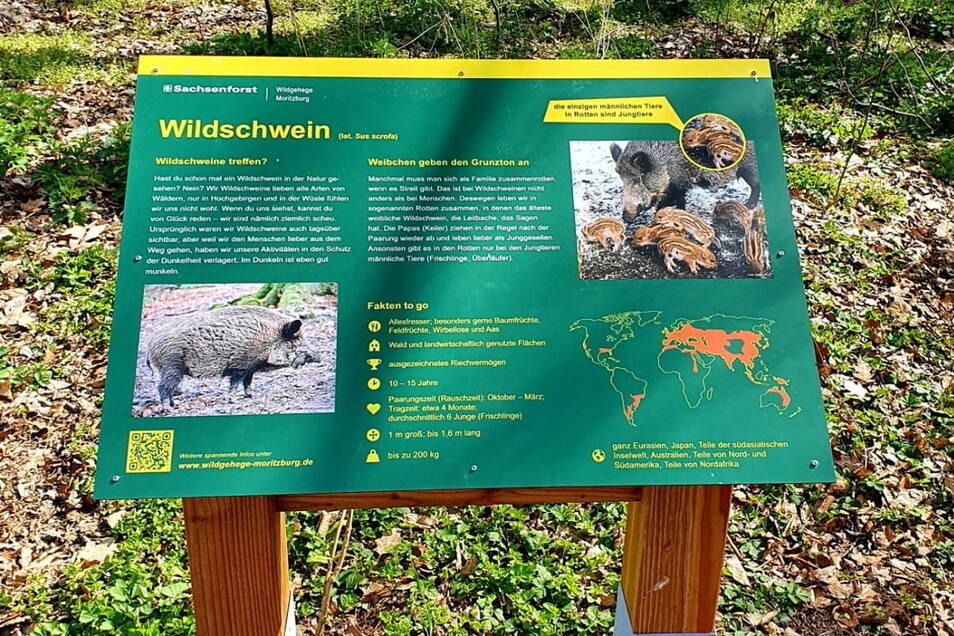 Die neuen Infotafeln, wie hier bei den Wildschweinen, vermitteln im gesamten Wildgehege viele interessante Fakten.