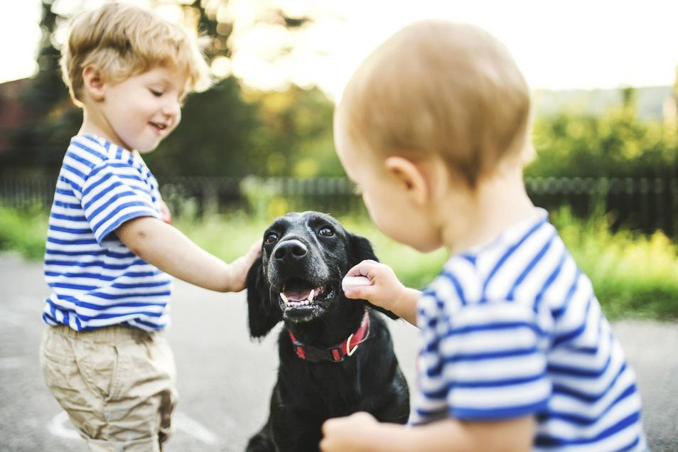 Bei der Therapie gegen eine Hunde-Phobie können Kinder durch Konfrontation ihre Angst Stück für Stück überwinden.