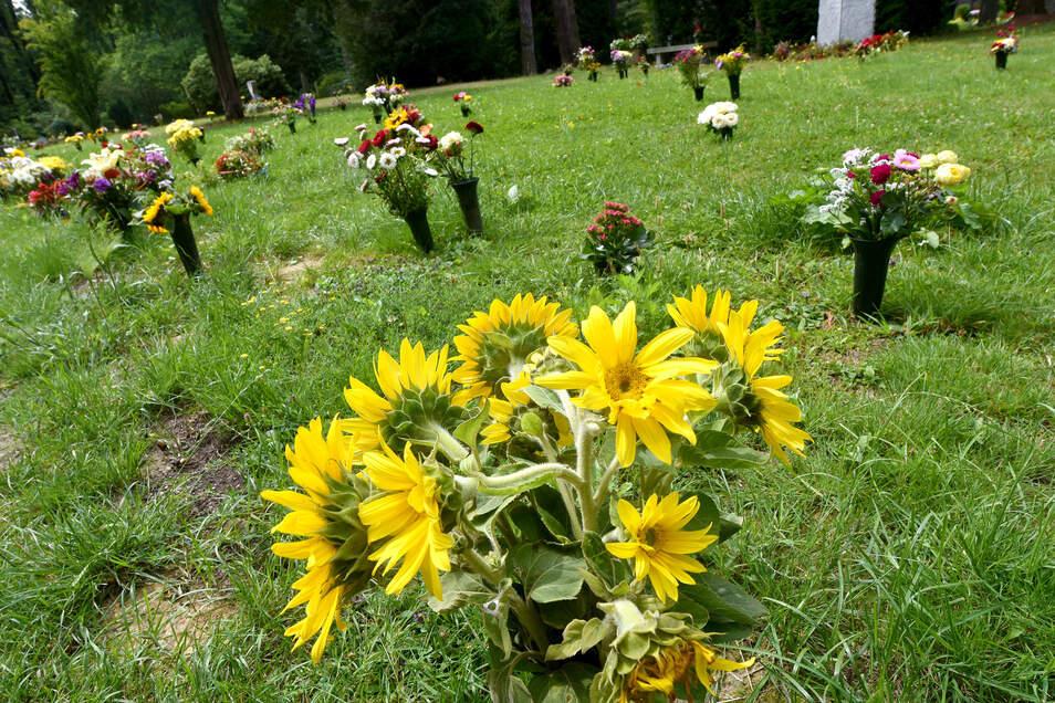 Blumenvasen auf der Wiese des Zittauer Urnenhains - eine Grabschändung?