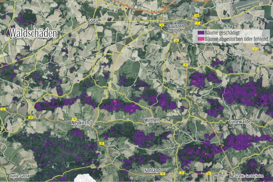 Waldschäden in der Region Bautzen