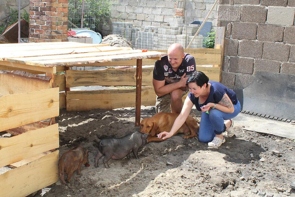 Ernie und Gustav sind der Familie von Tina und Rene Schubert schon sehr ans Herz gewachsen. Selbst Hund Arco sucht den friedlichen Kontakt zu den beiden Minischweinen.