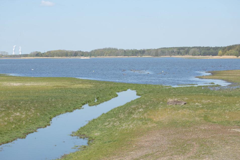 Inzwischen grünt es auf den Flächen im Quitzdorfer Stausee, die eigentlich im Wasser verschwunden sein müssten.